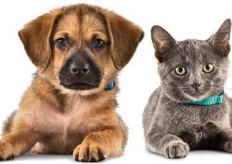 Colorado Springs area pet adoption fairs and events starting Aug. 25