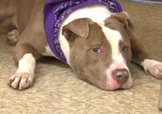 Cook County Jail inmates to train shelter dogs in Tails of Redemption program