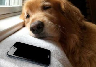 Dealing With Canine Separation Anxiety