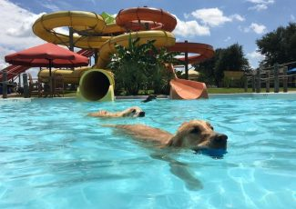 Dog About Town: Paddling with your pooch and more things to do