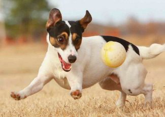 Electric Shock Collars for Pets to Be Banned in England