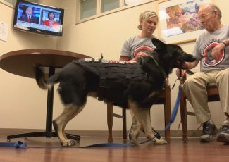 Healing heroes two at a time: Non-profit provides service dogs to veterans free of charge