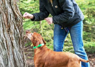 K9 'nose work' training planned: The nose knows