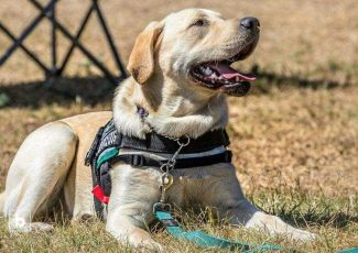 Meet the medical alert dogs saving the lives of diabetics in SA