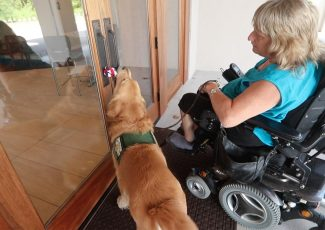 Our Opinion: Confront glut of fake service dogs