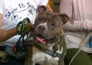 Pet Parade: PittieLove Rescue