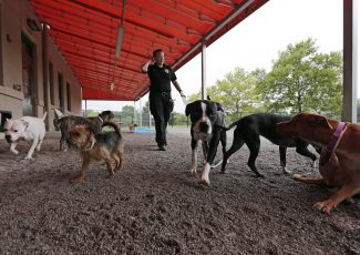 Play dates at the Franklin County dog shelter socialize canines, staffers alike