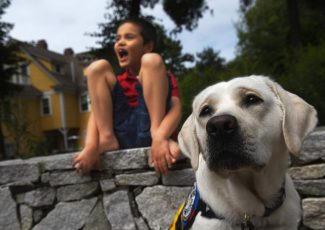 Poppy the service dog connects with autistic boy