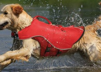 The best dog life jackets you can buy