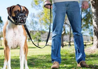 The best dog muzzles you can buy