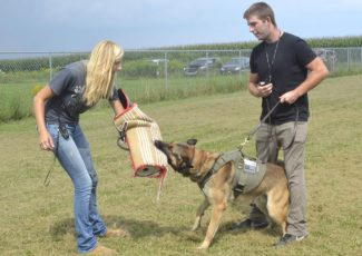 TOP DOG TRAINING: St. Marys couple teaches canines to shine