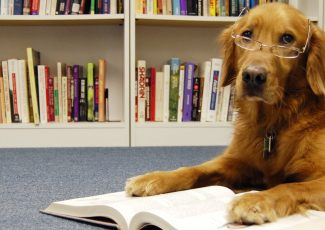 Back to School for Kids and Dogs: Training Tips That Will Help You and Your Pup Get an A+