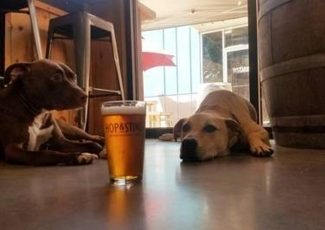 Dog About Town: Catching a concert and more things to do with your pooch