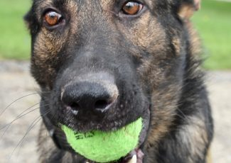 Hartville police dog needs ACL surgery