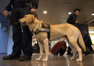 How to adopt service dogs that failed government training by being 'too nice'