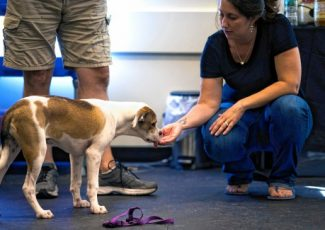 Learning to comfort: More people are looking to pets to ease their anxiety