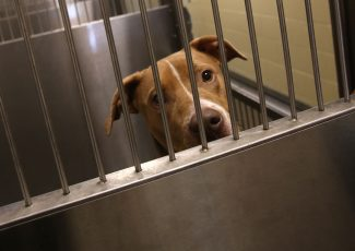 Lucas County Dogs for Adoption: 9/1