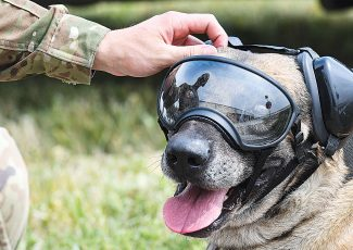 Military working dogs fly with 54th Helicopter Squadron