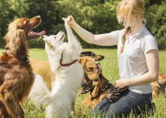 Tips for finding the right dog trainer